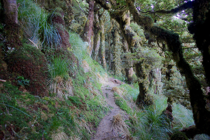 Beautiful soft walking on the Kapakapanui Track. A simple photo, but for some reason very appealing to me, probably my favourite photo of the trip.