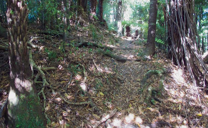 Lower portion of the Kapakapanui Track, Mar 2013.