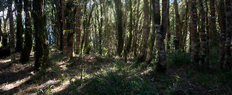 Trees Kapakapanui Track Mar 2013