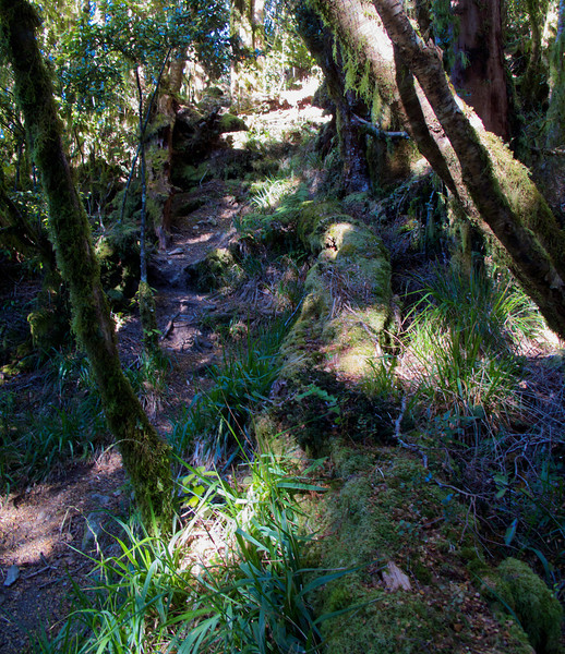 A little rise on the the Kapakapanui Track