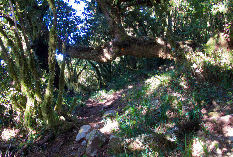 Don't bang your head on overhanging trees on the Kapakapanui Track