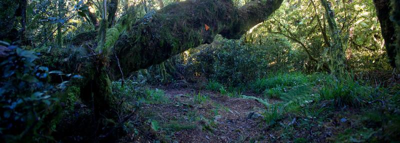 Overhanging log, Kapakapanui Track