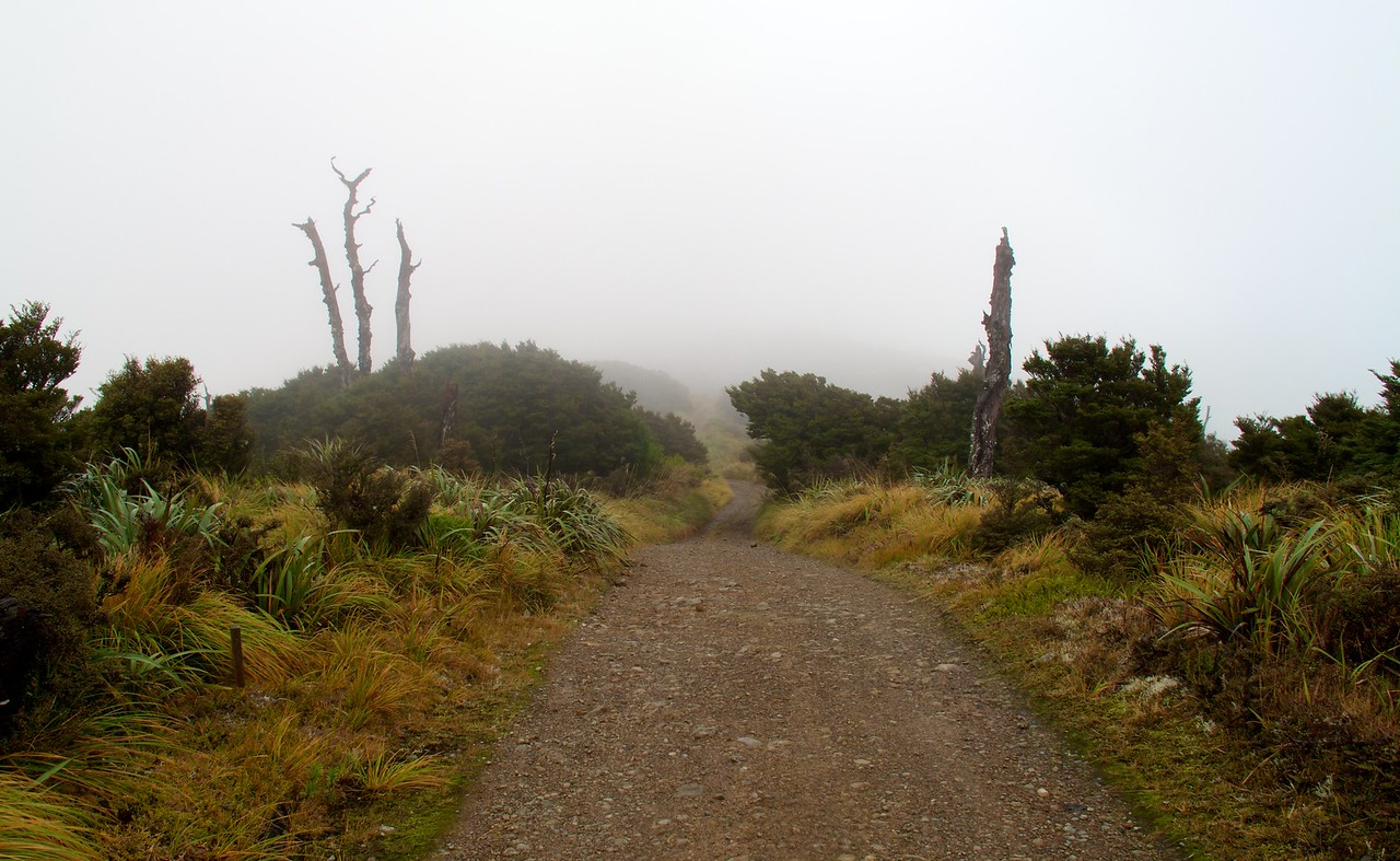 Out in the Open and Mist
