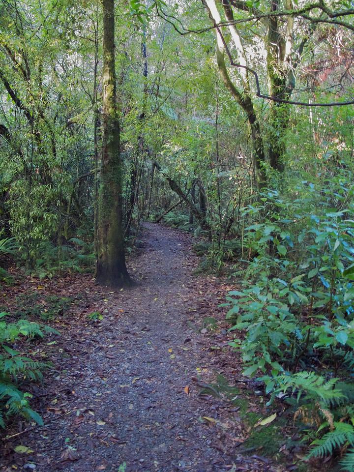 Walking through thick bush Tanes Track IMG_2406