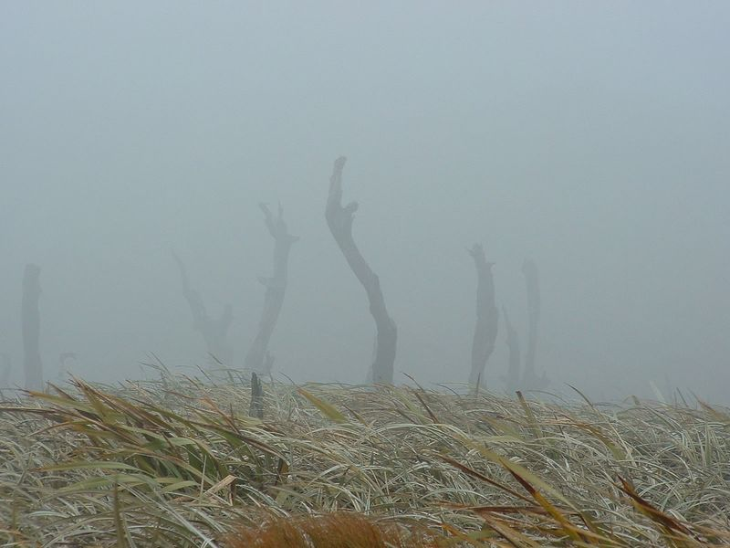 I like the 'moody' look of this picture - the mist and the dead tree trunks. It can be quite errie (but always fun) up here sometimes.<br /> Note the wind by the flax bushes leaning over - another typical day at the summit of Mt Climie!<br /> <br /> 7 November 2003