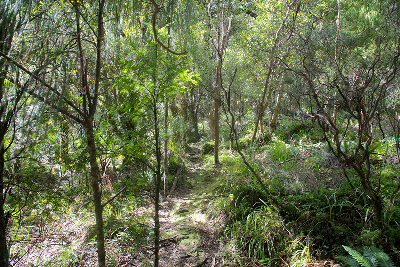 Easy walking on Norbett Creek Track