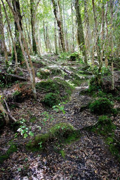 Uphill on Norbett Creek Track