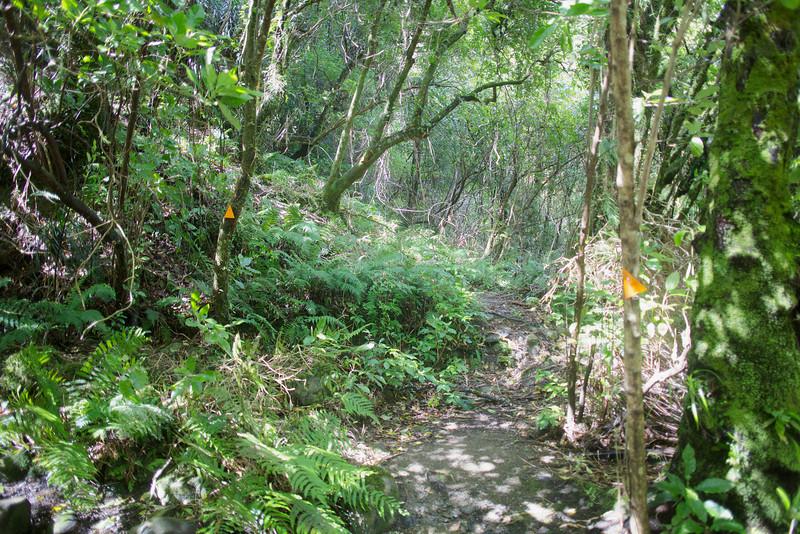 Norbett Creek Track Kaitoke Regional Park Oct 2012
