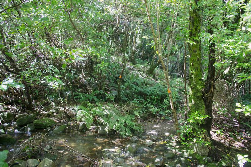 Start of Norbett Creek Track