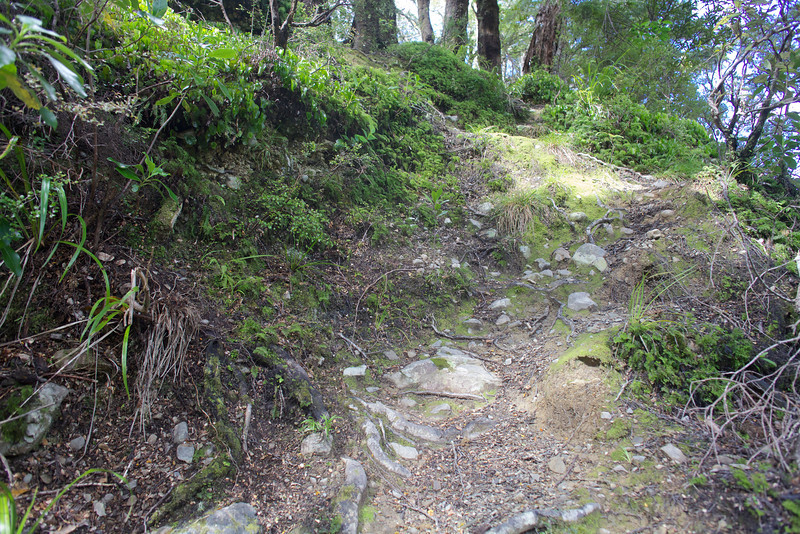 Leaves stones and roots on the Norbett Creek Track (1)