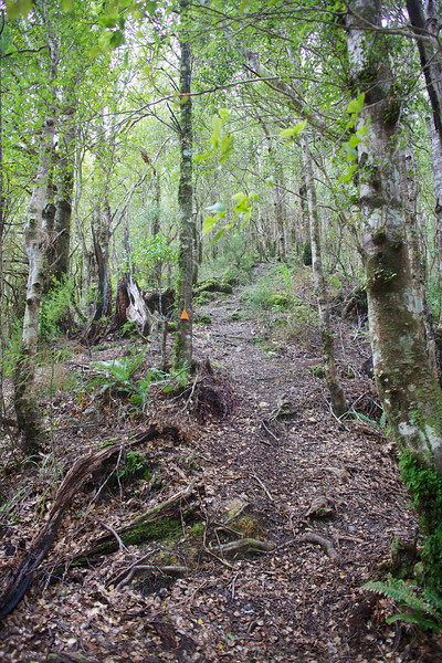 Gentle under foot on Norbett Creek Track
