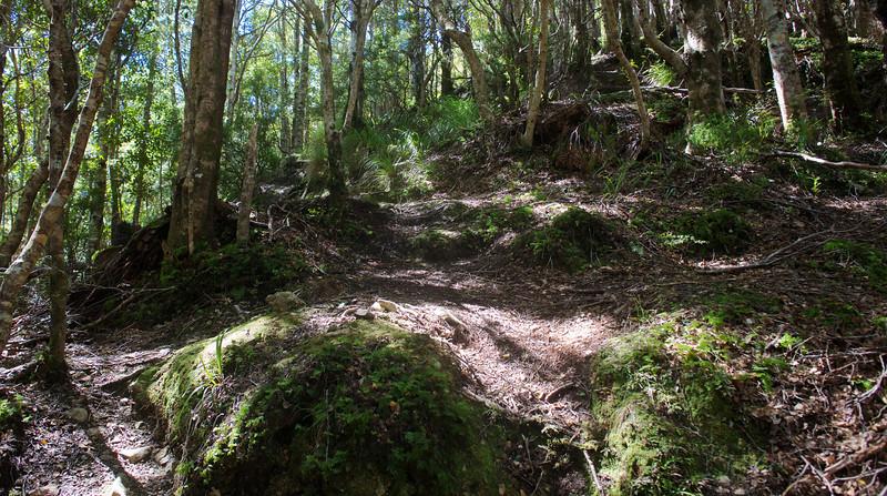 Dabbled Light Norbett Creek Track Oct 2012