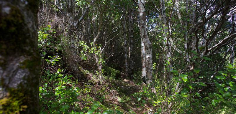 Upper Reaches of Norbett Creek Track Oct 2012