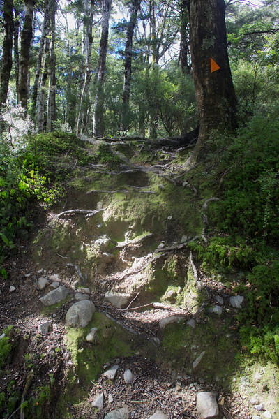 Nice Steps Norbett Creek Track