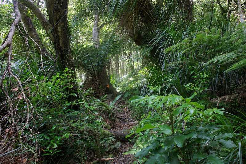 Dense Bush Norbett Creek Track
