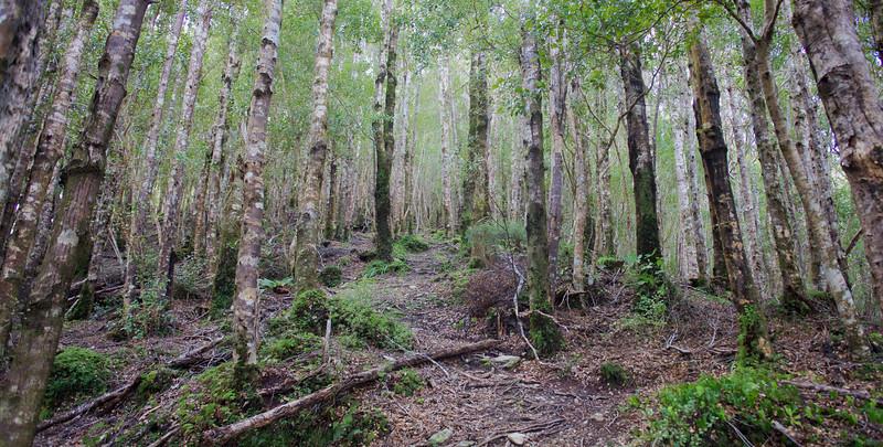 Easy walking on Norbett Creek Track (1)