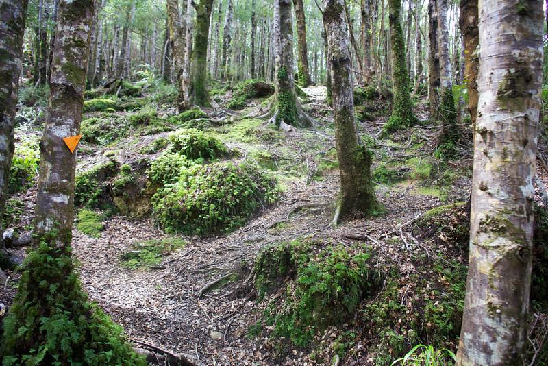 Beautiful path through Trees and Greenery