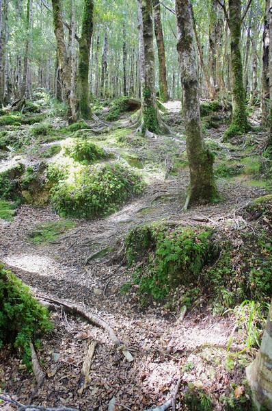 Enchanted Forest through Norbett Creek Track