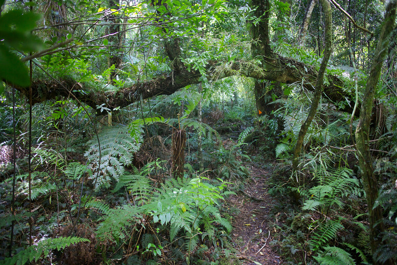 Horizontal Branch Norbett Creek Track