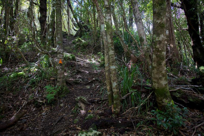 Norbett Creek Track Kaitoke Regional Park Oct 2012 (1)