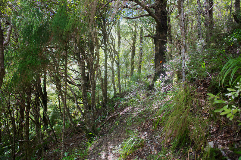 Ever onwards and upwards on Norbett Creek Track