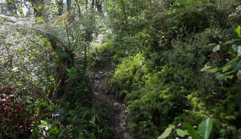 Greenery on Norbett Creek Track