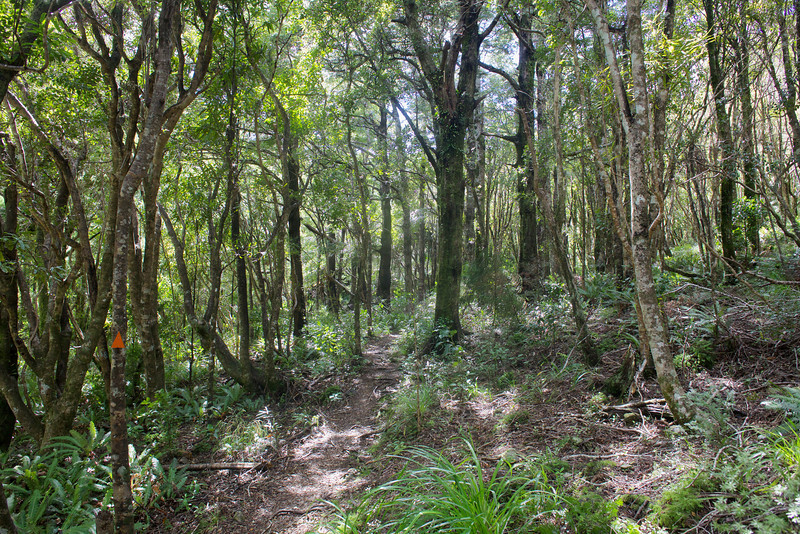 More easy walking on Norbett Creek Track