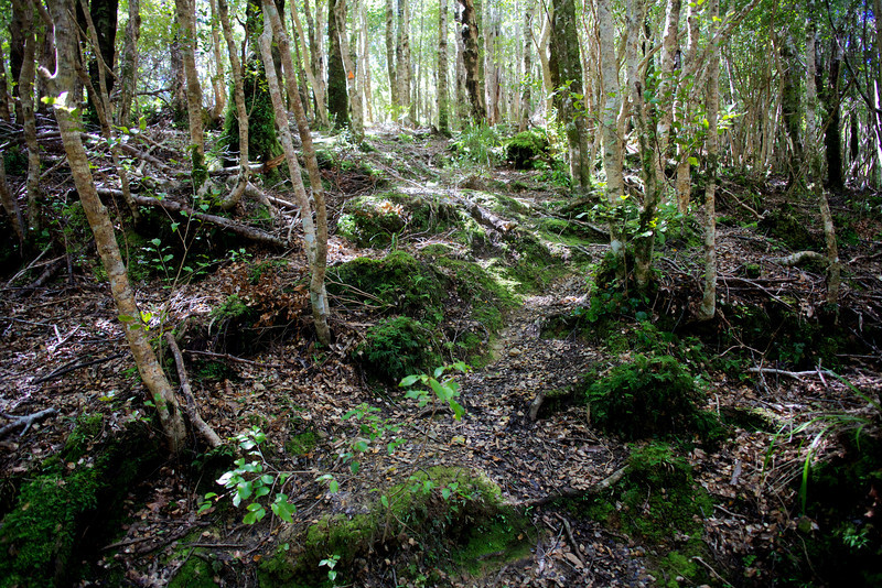 Norbett Creek Track Oct 2012