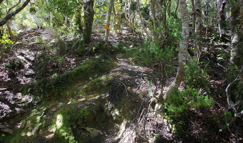Mossy Steps Norbett Creek Track Oct 2012
