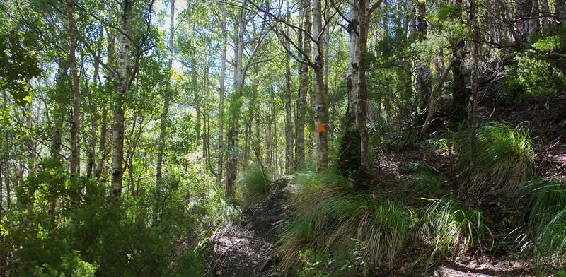 Norbett Creek Track Oct 2012 (2)