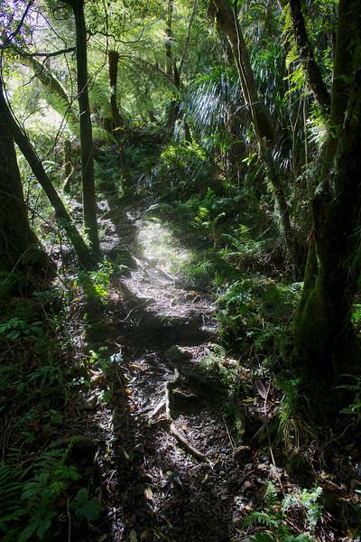 Steep Start of Norbett Creek Track