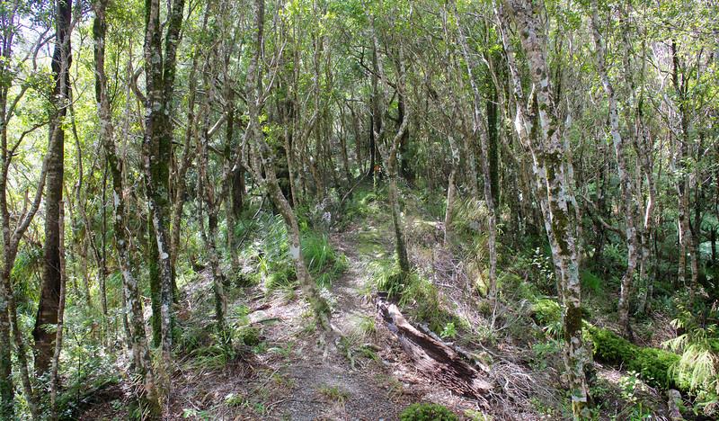 Pathway through the Trees Norbett Creek Track