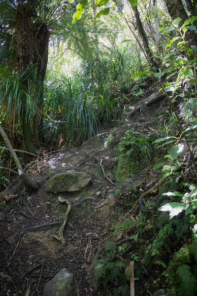 Another steep section of Norbett Creek Track