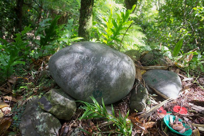 A surprise on Norbett Creek Track