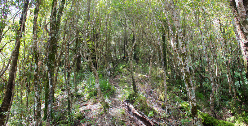 Continuing upwards on Norbett Creek Track