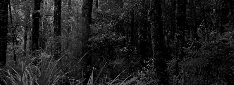 Bush alongside Atiwhakatu Stream, Tararua Forest Park May 2011