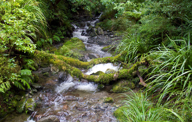 Small tributary flowing into the Atiwhakatu Stream, Tararua Forest Park, May 2011