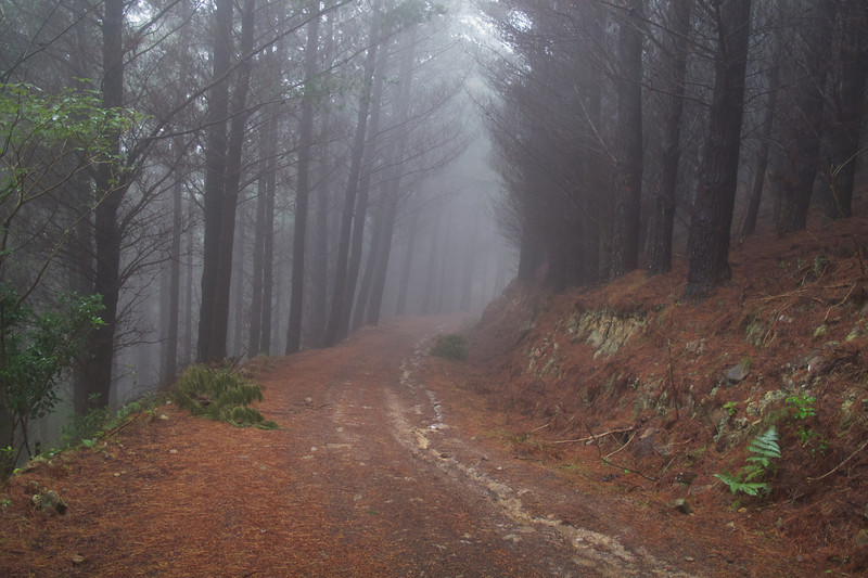 Wet and misty day on the 4WD Track Descent Oct 2011