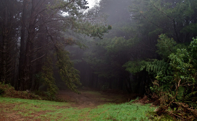 Wet and Misty start of descent of Pine Plantation Oct 2011