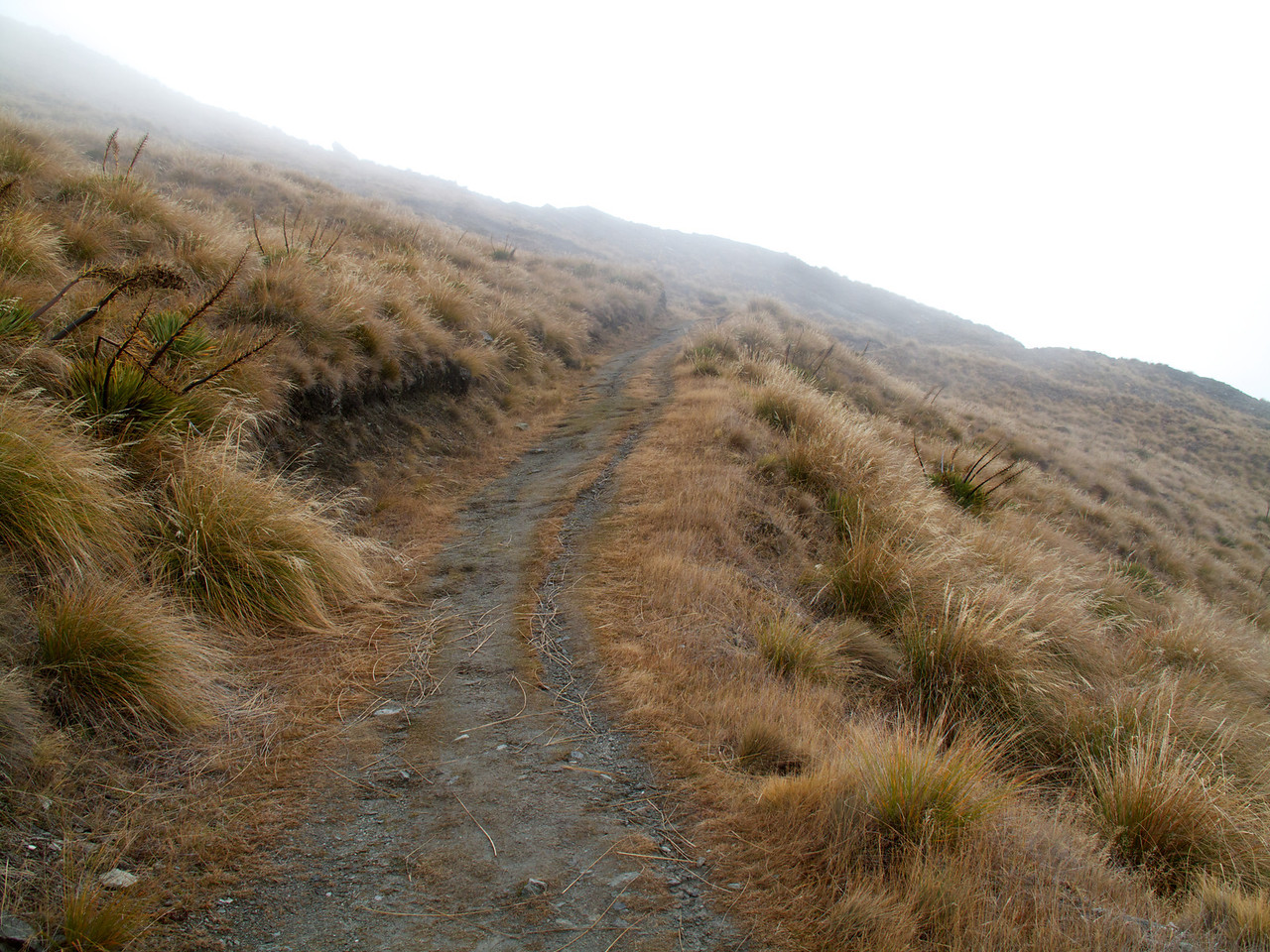 Lots of ZigZags from here to the Summit Roys Peak