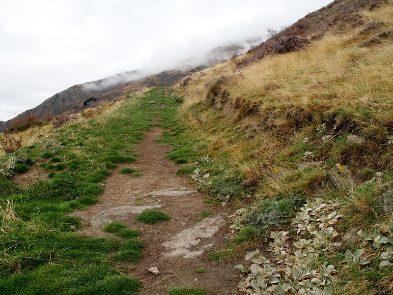 Typical track on first half of Roys Peak Track