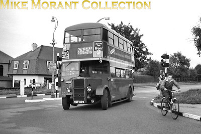 London Transport 'Park Royal' Daimler bus no. D222, registration HGF 899 on route 262 at Cheam. D222 was new to service in July 1946 and was a Sutton bus for its short working life. Withdrawal from LT service came in December 1953 but there was a new lease of life beckoning in Ceylon from the following month. Route 262 was one of London's shortest lived routes starting one week after the 1953 Coronation and ending nine months later at the beginning of March 1954. It was worked by one bus (and just 2 crews a day) with a 10 minute running time. Even today the provision of buses in the immediate area is sparse. [Mike Morant collection]