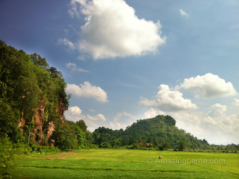 Limestone Karsts and Rice Paddies,Trang, Thailand