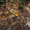 A row of mushrooms