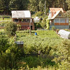 Very standard and typical: every suburban and village house in Siberia has a back-yard garden full of potatoes, with a few sunflowers, carrots, other veggies.
