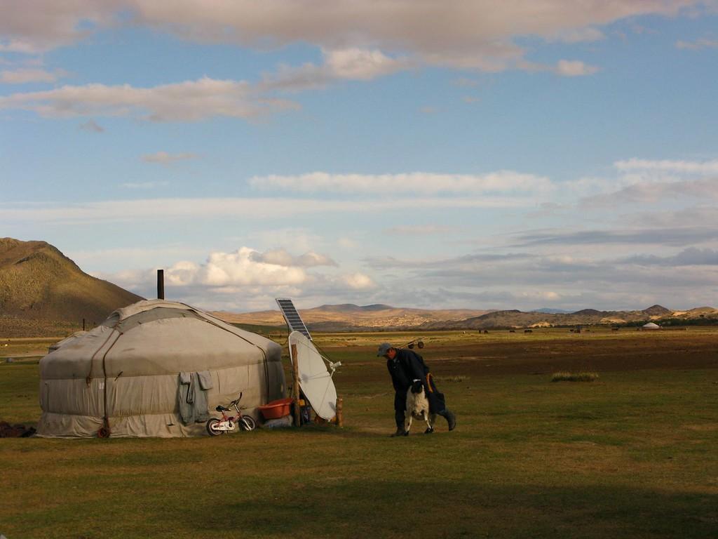 sheep mongolia