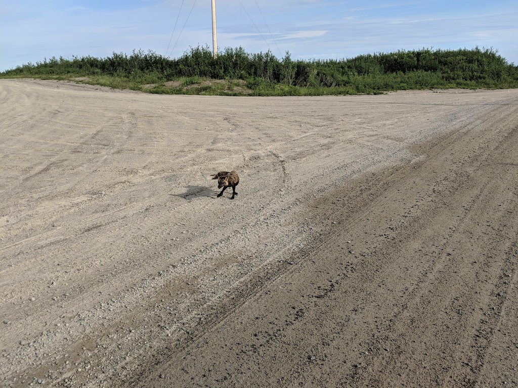 Riding the Most Remote Road in North America, Trans Taiga Rd IMG_20180721_180010-XL