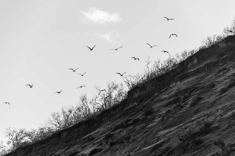 Wind Under Wings