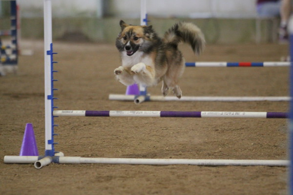 Saturday Jumpers 1-2
