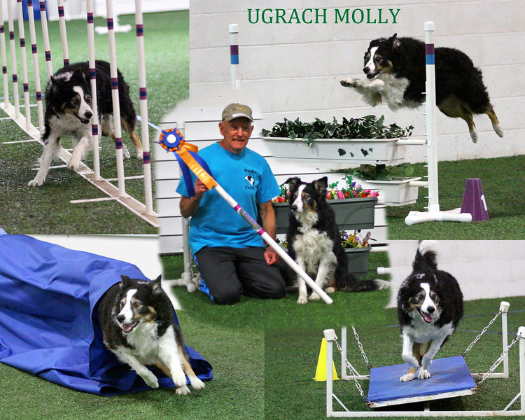 Molly collage with title